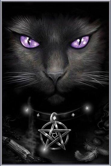 Magical cat Indrammet plakat