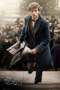 Fantastic Beasts And Where To Find Them - New York Scamander